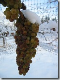 Yes, winemakers really do let the grapes freeze to make icewine.